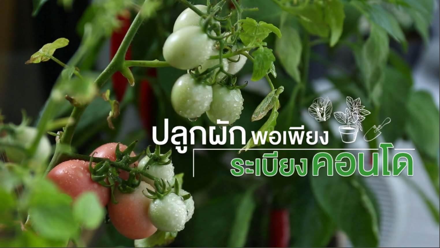 ปลูกผักพอเพียง ระเบียงคอนโด Healthy Living By AssetWise